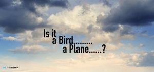 bird_plain_header